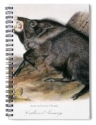 Collared Peccary, 1846 Spiral Notebook