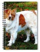 Collie On Lawn Spiral Notebook