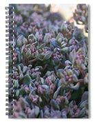Color Flash Spiral Notebook