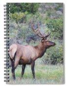 Colorado Elk Spiral Notebook