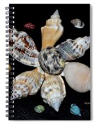 Colored Seashells Spiral Notebook