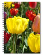 Colorful Bright Tulip Flowers Field Tulips Floral Art Prints Spiral Notebook