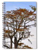 Colorful Cypress Spiral Notebook