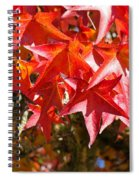 Colorful Fall Tree Red Leaves Art Prints Spiral Notebook