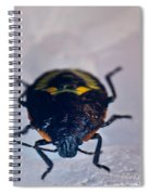 Colorful Hemiptera Nymph 1 Spiral Notebook