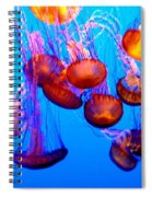 Colorful Jellies Spiral Notebook
