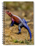 Colorful Lizard Spiral Notebook