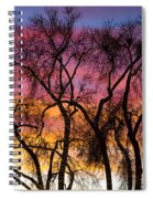 Colorful Silhouetted Trees 26 Spiral Notebook