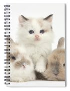 Colorpoint Kitten With Baby Rabbits Spiral Notebook
