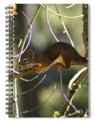 Comfy In A Tree Spiral Notebook
