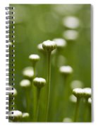 Coming Up Daisies Abstract Spiral Notebook