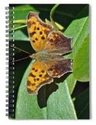 Comma Anglewing Butterfly - Polygonia C-album Spiral Notebook