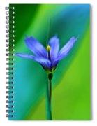 Common Blue Eyed Grass Sisyrinchium Spiral Notebook