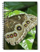 Common Blue Morpho 2917 Spiral Notebook