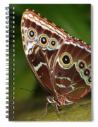 Common Blue Morpho Spiral Notebook