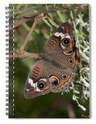 Common Buckeye Butterfly Din182 Spiral Notebook