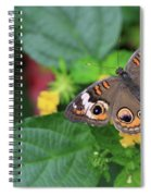 Common Buckeye II Spiral Notebook