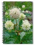 Common Buttonbush - Cephalanthus Occidentalis Spiral Notebook