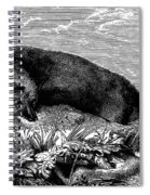 Common Fox Spiral Notebook