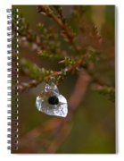 Common Frog Wrong Place Spiral Notebook