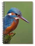 Common Kingfisher Alcedo Atthis Spiral Notebook