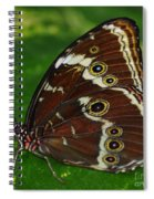 Common Morpho Spiral Notebook