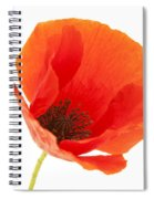 Common Poppy Flower Spiral Notebook