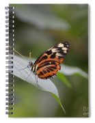 Common Tiger Glassywing Spiral Notebook