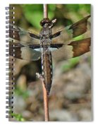 Common Whitetail Dragonfly - Plathemis Lydia - Female Spiral Notebook