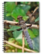 Common Whitetail Dragonfly - Plathemis Lydia - Male Spiral Notebook