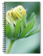 Cone Flower Rubeckia Hirta  Spiral Notebook