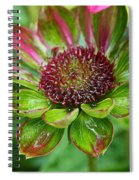 Confused Cone Flower Spiral Notebook
