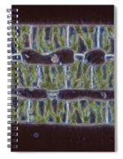 Conjugation In Spirogyra Algae Lm Spiral Notebook