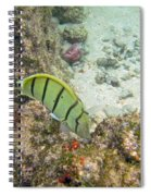 Convict Tang Manini P1060089 Spiral Notebook