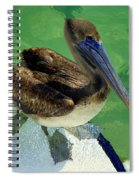 Cool Footed Pelican Spiral Notebook