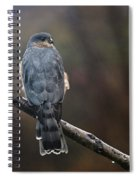 Coopers Hawk Spiral Notebook
