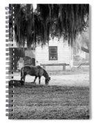 Coosaw - Grazing Free Spiral Notebook