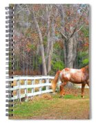Coosaw - Outside The Fence Spiral Notebook