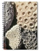 Coral Cobbles On Beach Of Bonaire Spiral Notebook
