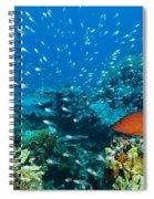 Coral Reef In Thailand Spiral Notebook