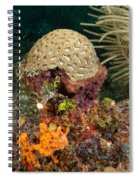 Coral Top Knot Spiral Notebook