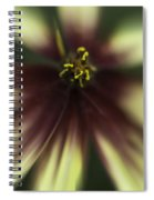 Coreopsis Route 66 Spiral Notebook