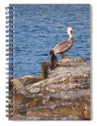 Cormorants And Pelican Spiral Notebook