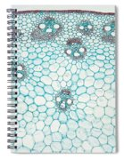 Corn Stem Spiral Notebook