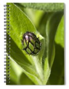 Cornflower Bud Spiral Notebook