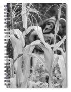 Cornstalks Black And White Spiral Notebook