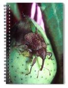 Cotton Boll Weevil Spiral Notebook