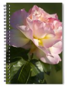 Cotton Candy Pink Peace Rose Spiral Notebook
