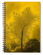 Cottonwood Tree April 2012 In Gold Spiral Notebook