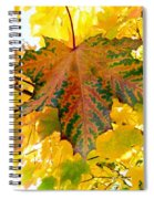Country Color 21 Spiral Notebook